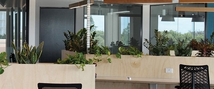 New co-working fitout for the Sunshine Coast